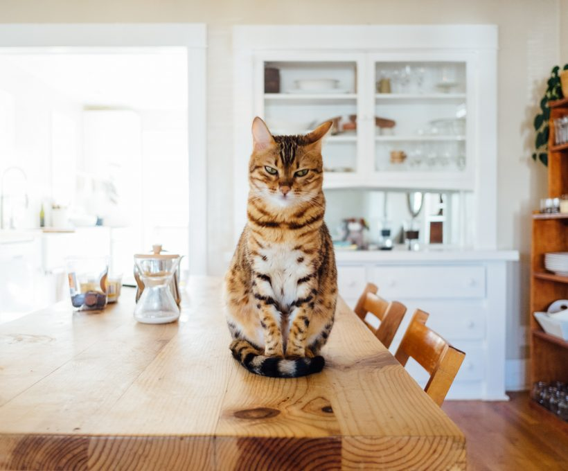 5 dingen in de keuken waar ik rotslecht in ben