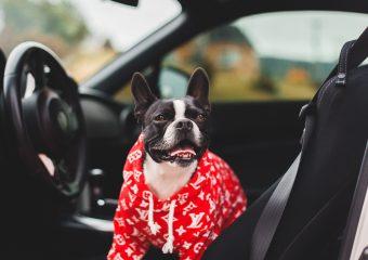 's Werelds slechtste chauffeur tot uw dienst