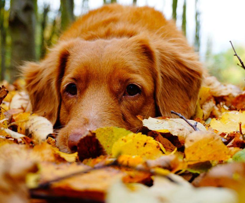 14 verschrikkelijke dingen aan de herfst
