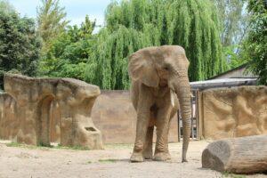 naar de dierentuin - olifant