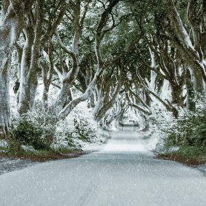 ireland, the dark hedges, beech