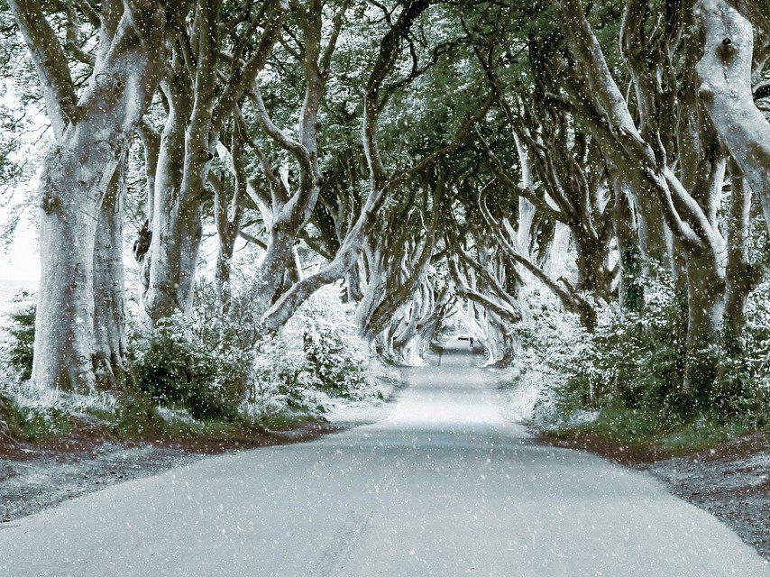 ireland, the dark hedges, beech