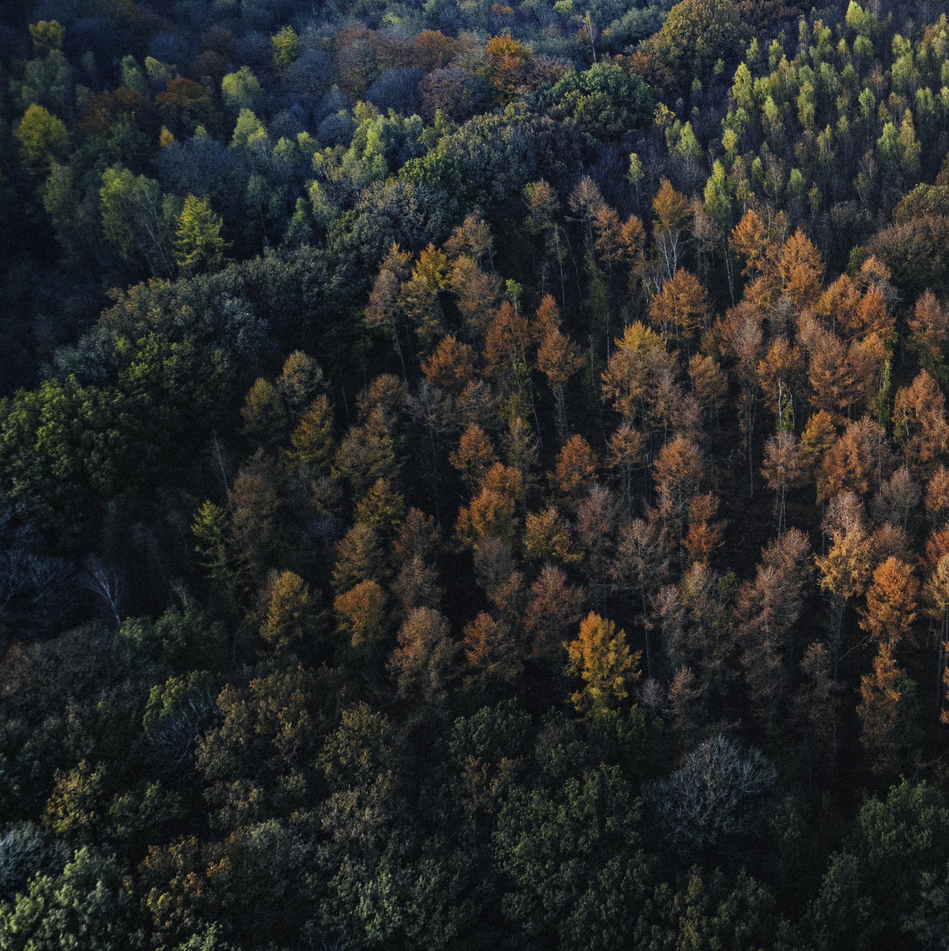 Dronefoto luchtfotografie content creatie