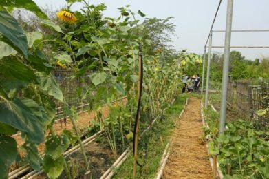 Wildflower Home nu: groententuin