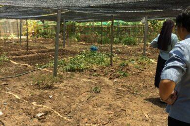 aanleg groententuin