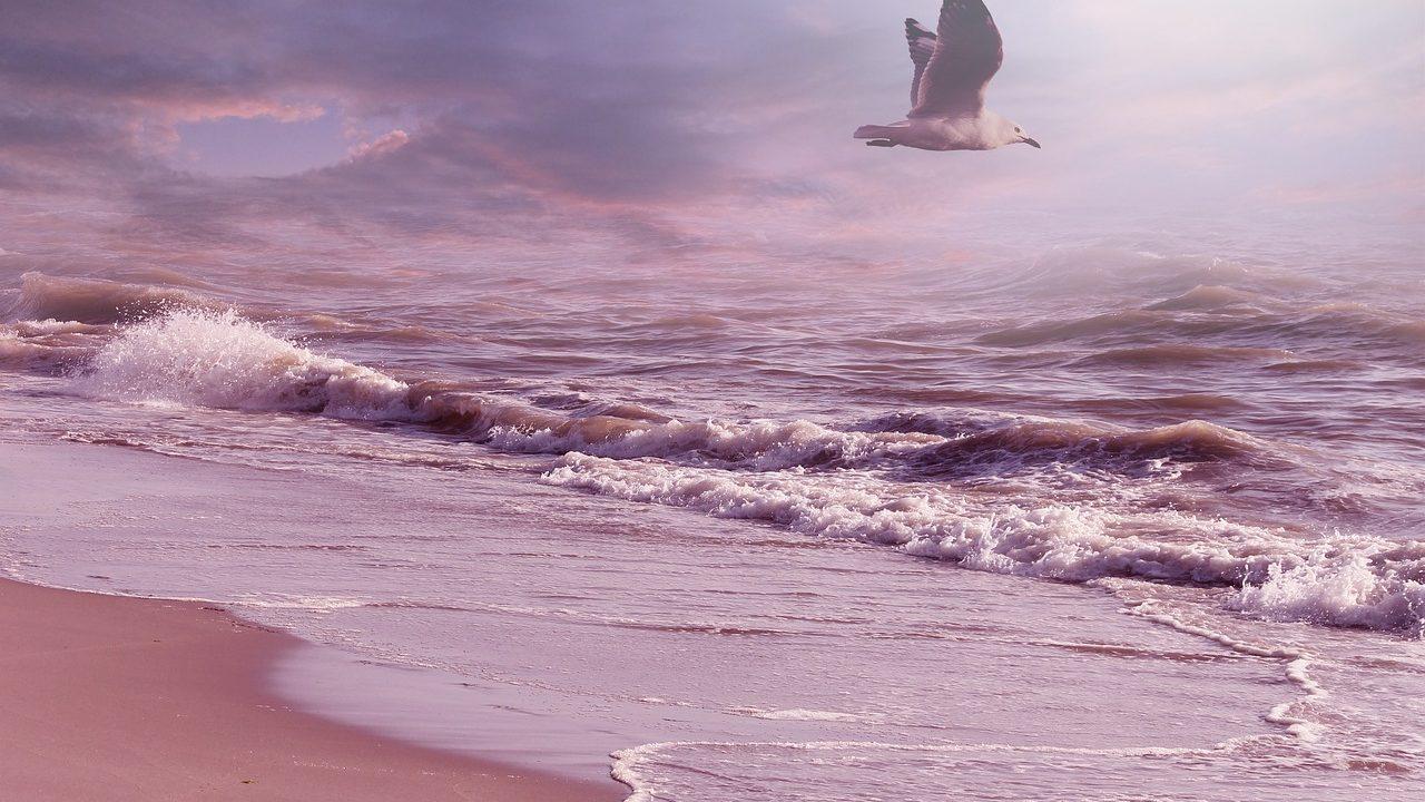 Flying bird - freedom