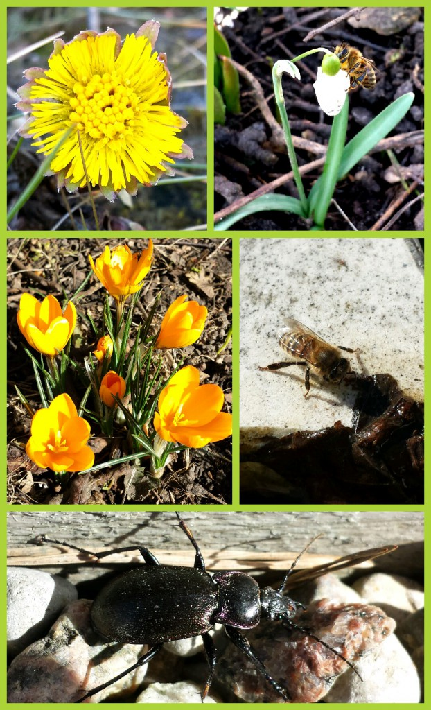 Collage 2014-03-08 15_02_58