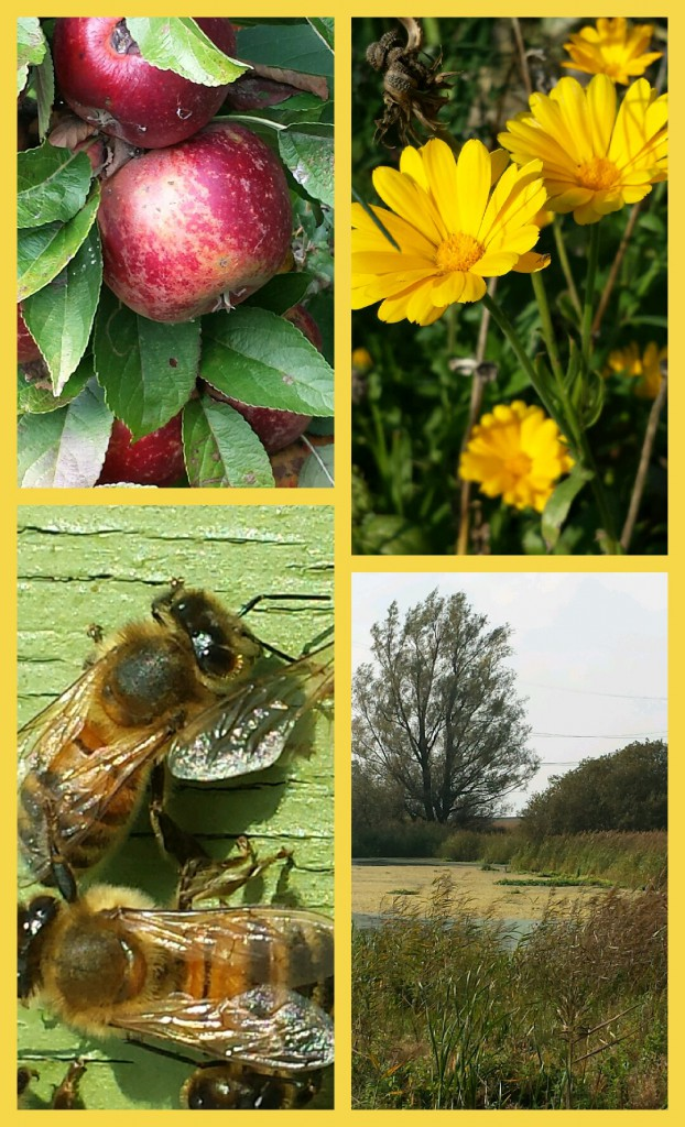 Collage 2014-10-04 13_47_22