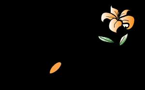 Feng Shui Webdesign