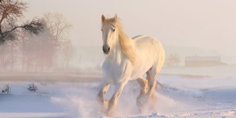 hästskötare