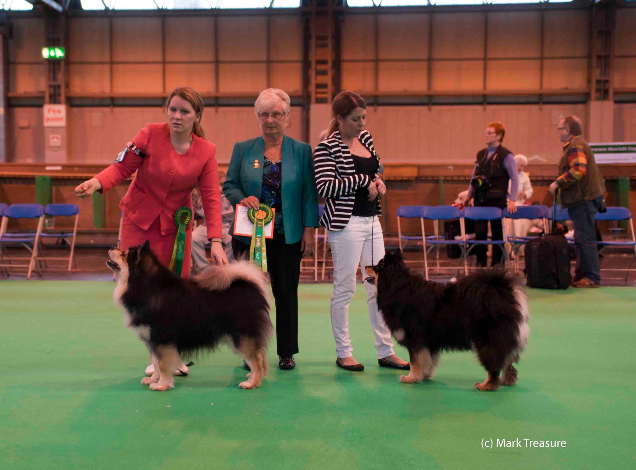Matka and Kia doing the double at Crufts