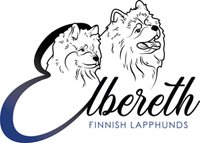 Elbereth Finnish Lapphunds