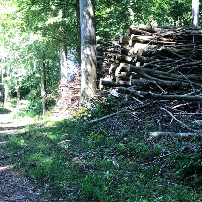 skov brænde brændestabel træer grøn wood fire