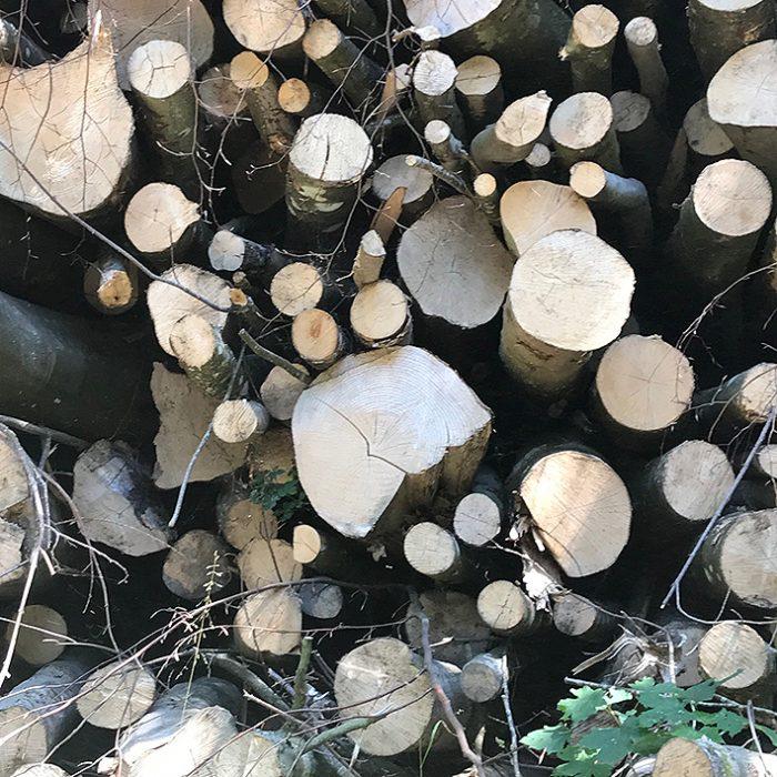træ brændestabel grene wood tree