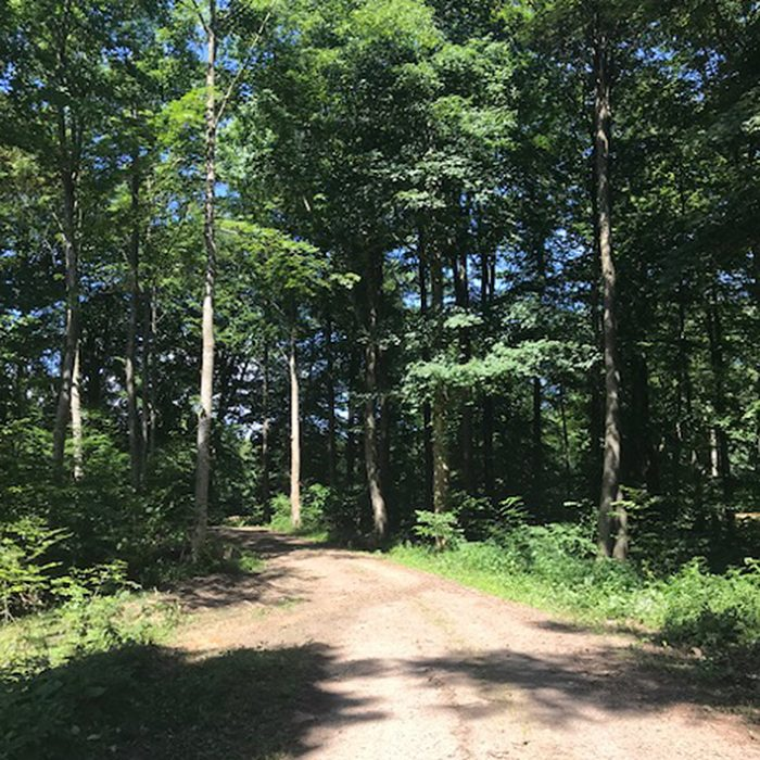 skovsti grusvej skovvej allé road forest nature