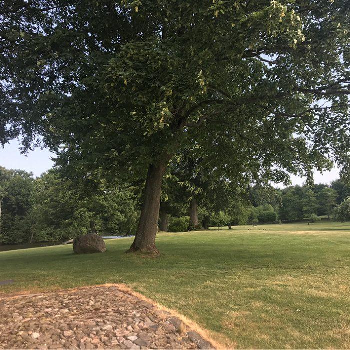 park lawn græsk træ træer trees forest