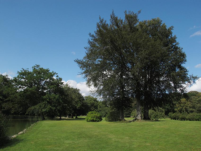 udsigt, park, græsplæne, træer, sø, lake, trees