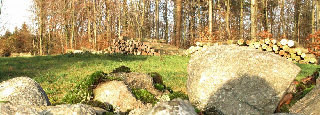 Skov sten træ forest wood trees træer