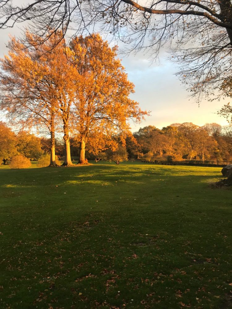 Park, efterår, autumn