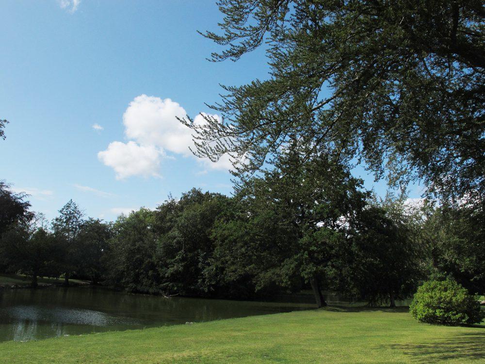 Park, plæne, grass