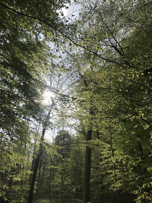 skov, træer, forest, wood, blade, leaves