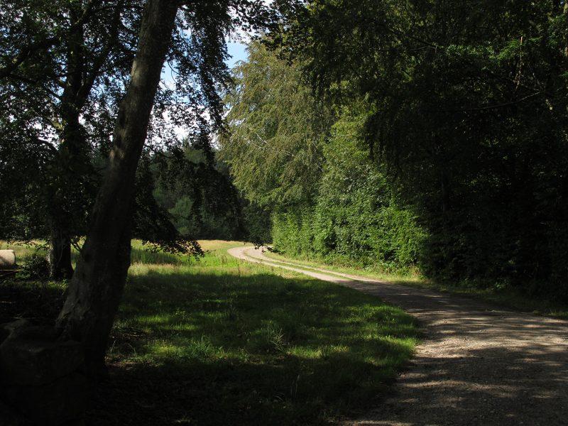 Skovbryn, skovsti, forest, road, trees, træer