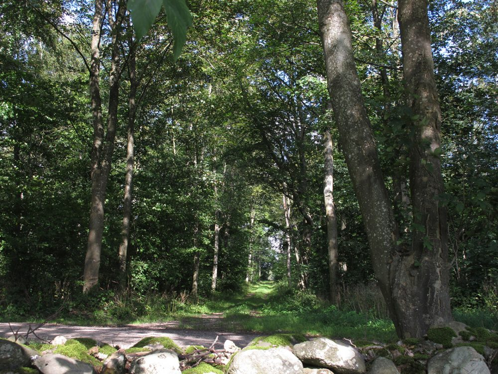 skovbryn, stensætning, skovsti, forest, stone