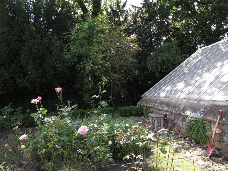 rosenhave, roses, garden, greenhouse, orangeri, orangery