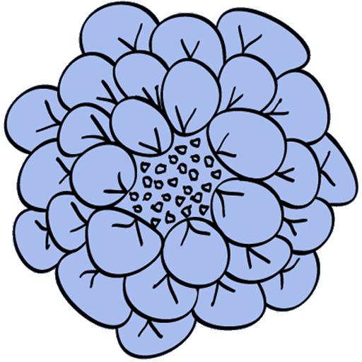 Min blå blomsterlogga
