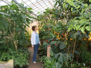 Оранжереи ботанического сада Орхус