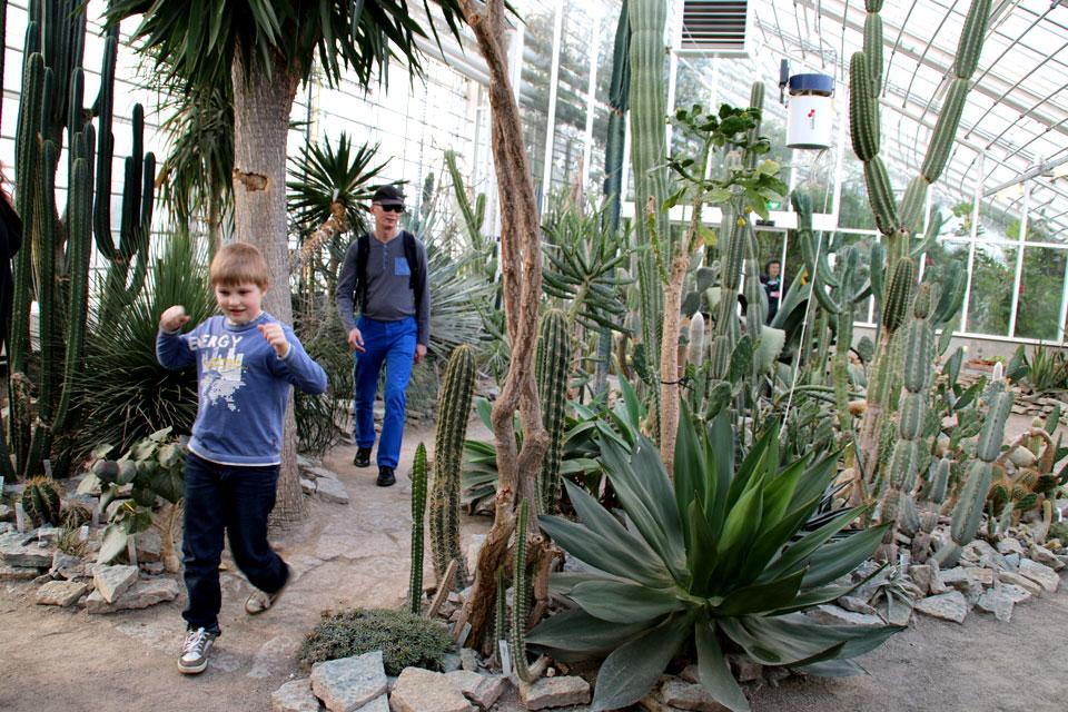 В отделе с кактусами и суккулентами ботанического сада г. Орхус, Дания