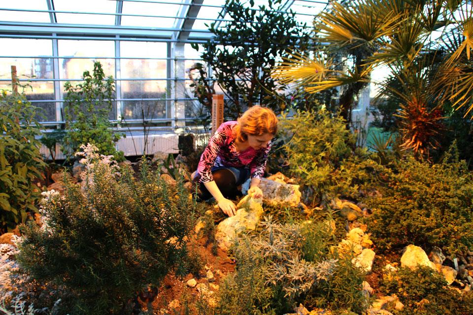 Ароматы. Оранжереи ботанического сада Орхус, Дания