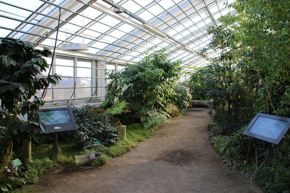 оранжереи ботанического сада Орхус, Дания