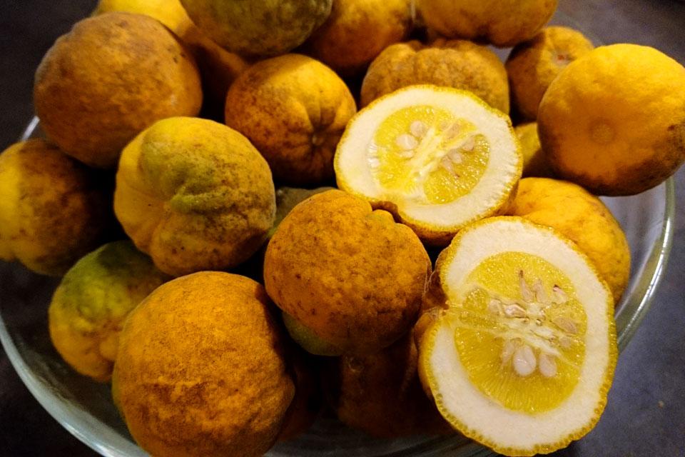 Понцирус трeхлисточковый Citrus trifoliata Poncirus trifoliata