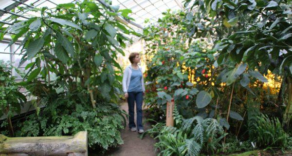 greenhouse_aarhus-florapassionis.com _5mar16