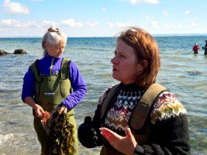 Сбор морских водорослей – этот мастер класс