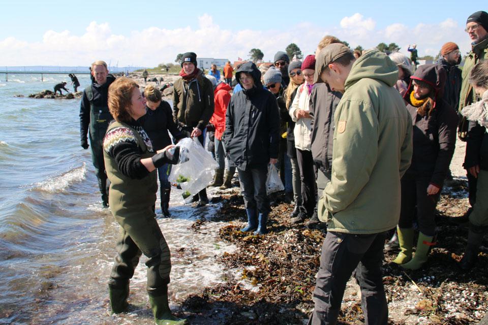 Сбор морских водорослей - мастер класс