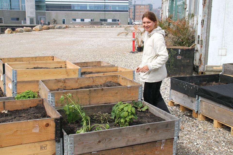 мини огороды в порту Орхуса