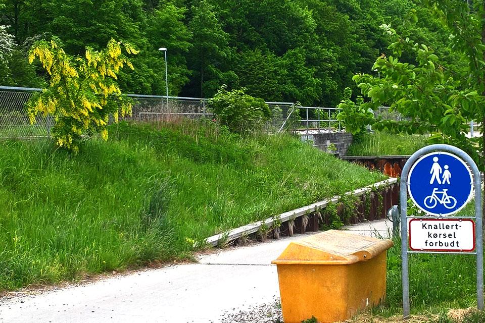 Бобовник - желтый дождь пророс около железной дороги