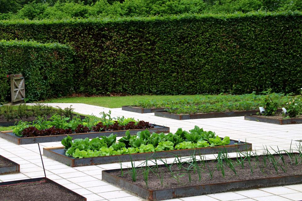 Прямоугольные грядки окружены аккуратно подстриженной зеленой изгородью