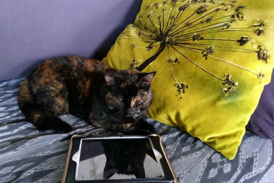 Моя кошка ФЛора и старая диванная подушка с мотивом цветущего борщевика