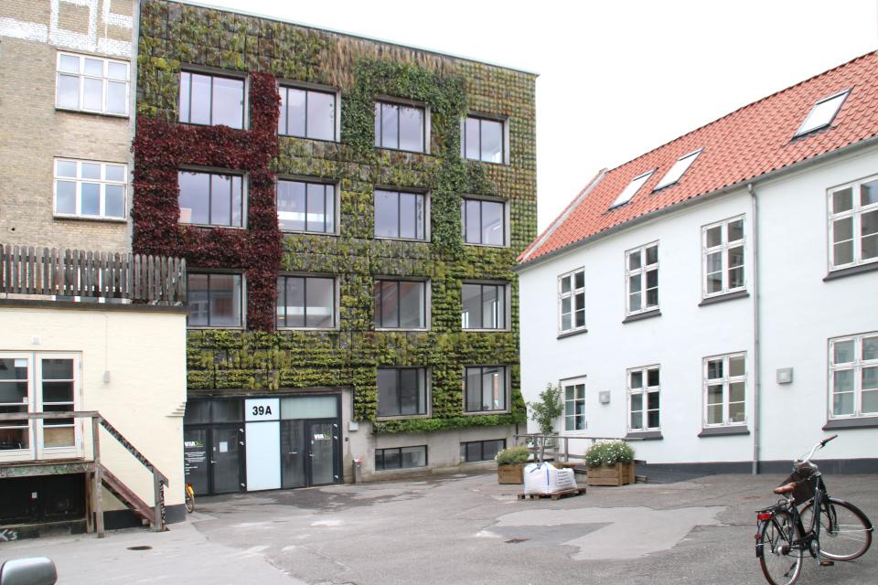 Вертикальный сад во дворе-колодце старой улицы Майлгэде города Орхус.
