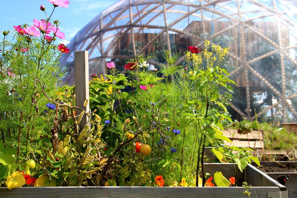 Городские огороды в порту г. Орхус