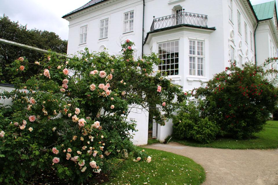 В королевском парке много роз исторических сортов