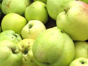 Яблоки сорт Филиппа