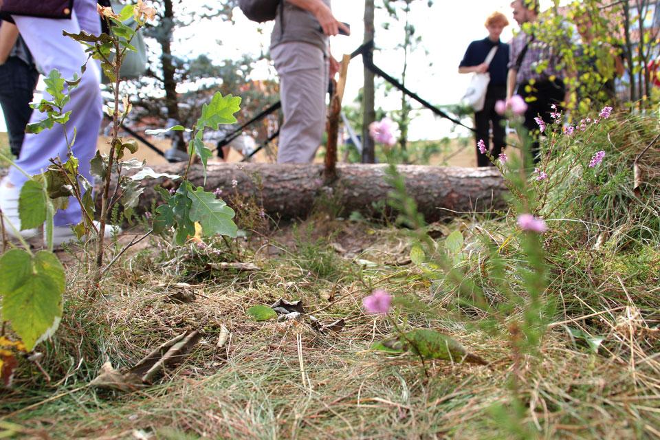 почвенный покров леса с вереском, мхом, проросшим дубом