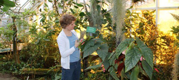 Теги с латинскими названиями растений www.florapassionis.com