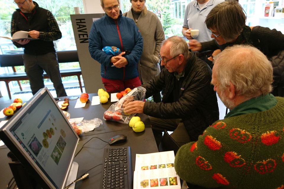 Узнать сорт яблок - мастер класс