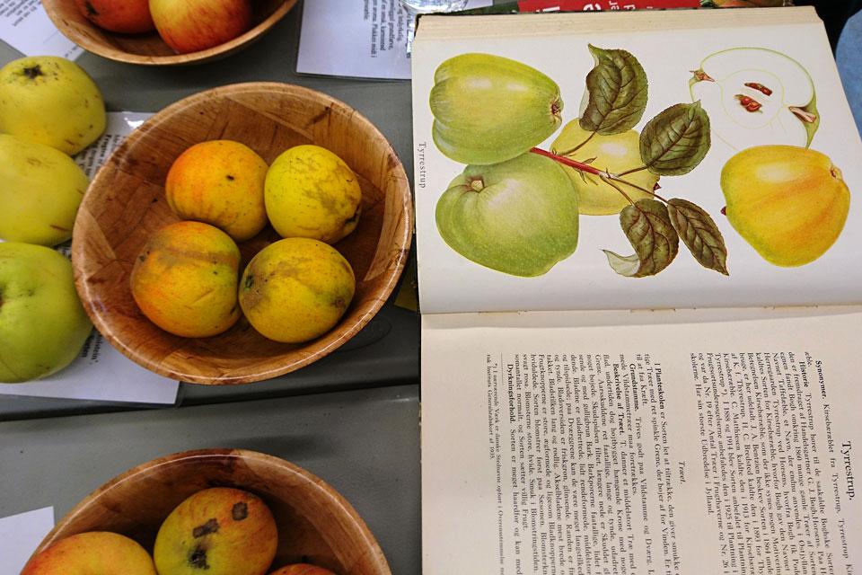 Яблоки редкого старого датского сорта Тюрреструпс (Tyrrestrups)