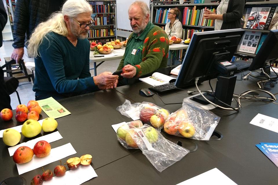 Чтобы узнать сорт яблок датчанин показывает фотографии яблони